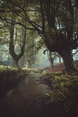 Green woods and small river