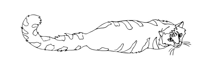 Hand drawn doodle cat lying down. Decorative outline illustration. Black sketch on white background, vector isolated.