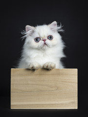 Persian cat / kitten standing in wooden box isolated on black background looking straight in camera with paws on edge of box