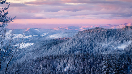 Extremely cold black forest warmed up by the early morning purple sun rays. The sky is opening up and the fir trees are covered with snow after the storm the day before.