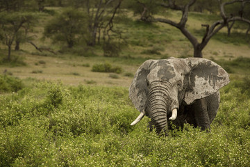 Messy elephant amidst plants on field
