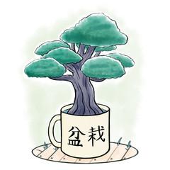 Bonsai tree growing inside a mug