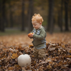 Cute baby boy looking at pumpkin while standing on dry leaves at park