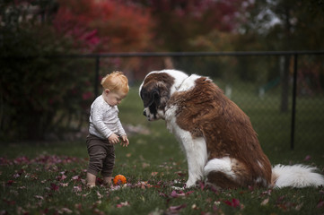 Baby boy and dog looking at pumpkin fallen on field in yard