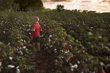 Rear view of boy standing amidst cotton plants at field