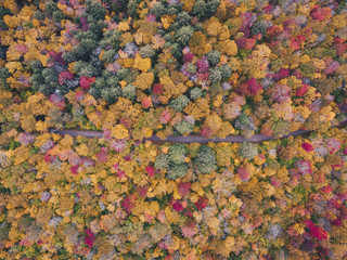 High angle idyllic view of trees in forest during autumn