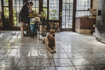 Female potter making clay pot at pottery with dog sitting on tiled floor in foreground