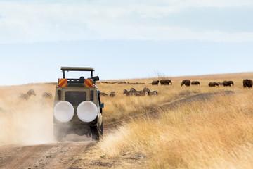 Photographer Safari Vehicle on Game Drive