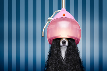 Foto auf AluDibond Crazy dog dog at hairdressers salon