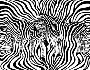 Zebra Couple background, seamless pattern. Animal skin print texture. Black and white, wild animal. design trendy fabric,  vector illustration.
