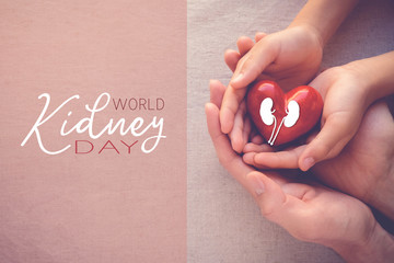 adult and child hands holding red heart with kidney, World Kidney Day