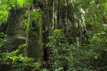 Stone cliff in lush rainforest