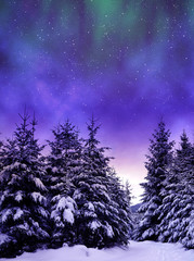 Snowy trees in winter landscape at the night sky with aurora borealis.