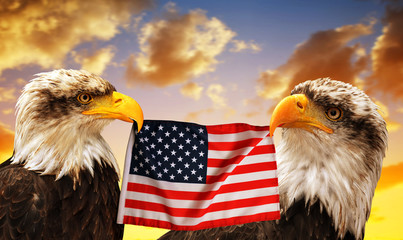 The Bald Eagles holds in the beak of the United States Flag at sunset.