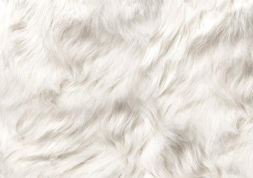 dog fur soft