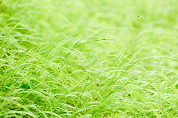 brigt spring grass