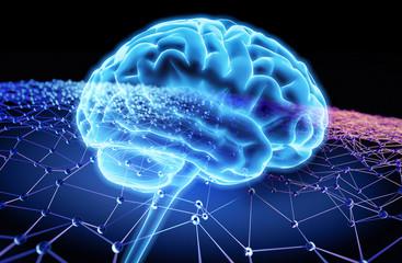 Gehirn und Netzwerk