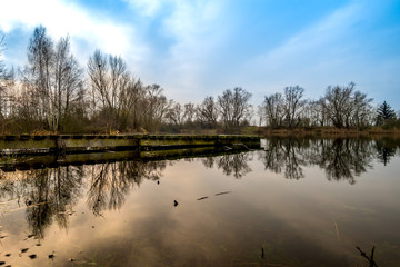 Baum und Wolken am Himmel Spiegel im Teich Bagger See