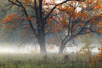Autumn sunrise in the grove on the riverbank