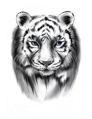 Hand-drawn line art portraits of the tiger in graphic style. Tattoo sketch, black and white illustration.
