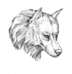 Hand-drawn line art portraits of the wolf in graphic style. Tattoo sketch, black and white illustration.