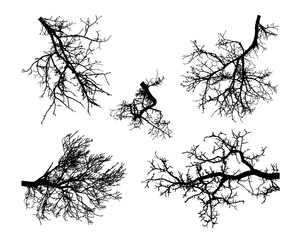 Realistic set of trees branches silhouette (Vector illustration)ai10