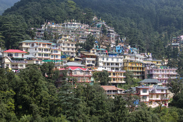 Houses and a pine forest in Himalaya mountains in Dharamsala, India
