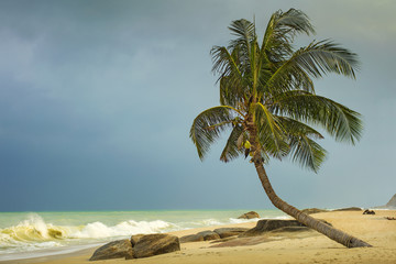 alone palm tree on the sand beach in windy day before sea sorm in Thailand
