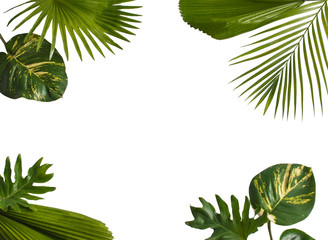 Creative nature layout made of tropical leaves