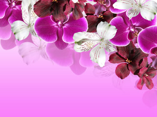 Beautiful floral background with orchids, alstroemerias and pelargonium
