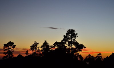 Nightfall among the pine trees, natural park of Pilancones, Gran canaria, Canary islands