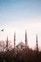 Vertical image of Blue Mosque Istanbul in evening