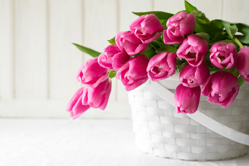 Violet tulips bouquet in basket in front of white wooden wall. Space for copy