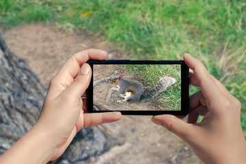 Female hand with mobile phone take picture of squirrel on the grass