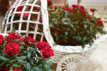 Beautiful roses in a decorative basket.