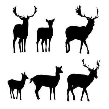 Set of vector silhouettes of deer with a fawn