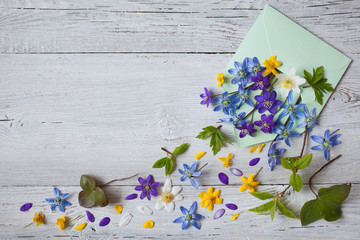 Forest spring flowers in an envelope on a wooden background