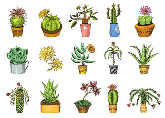 Succulents set, cactus, peyote, echeveria, haworthia, aloe vera. Green decorative plants in the teacup and pots. Floral botanical leaves engraved. hand drawn. vector collection bushes and branches.