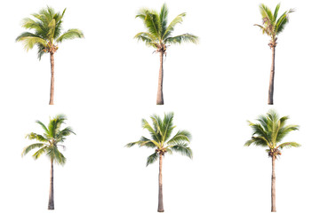 Foto auf Leinwand Palms six coconut tree isolated on white background