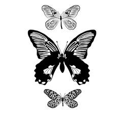 Butterfly vector clip art.