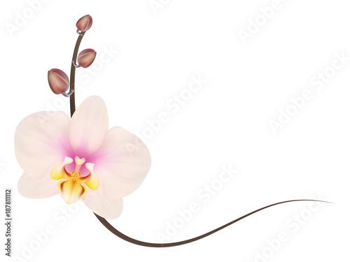 Realistic light pink orchid frame, corner.\