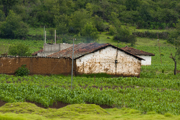 GUATEMALA San Andres Xecul, Totonicapan. House and corn plants in orchard.