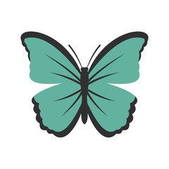 Insect butterfly icon, flat style