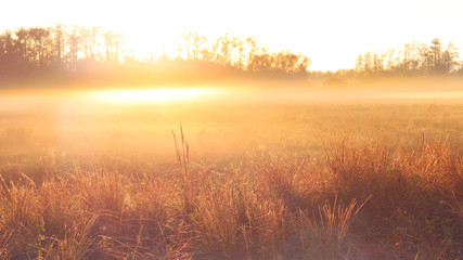 Nature Photography of an Sunrise over a Farmers Field with Heavy Mist and Dew