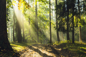 Forest sun rays wild road / God beams ,old natural green forest in north Poland