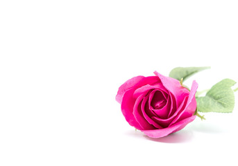 Red rose for Valentines day and Sweetest day, isolated on white background