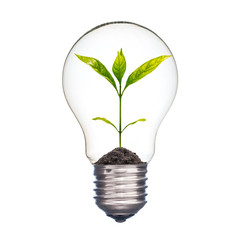 Small plant in a light bulb, Ecology concept