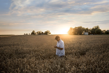 Caucasian man examining wheat in field