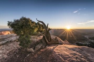 Tree in canyon at sunset, Moab, Utah, United States