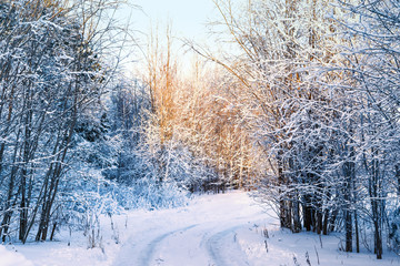 Trees and shrubs in frost, the road in the snow in the winter sun, winter landscape